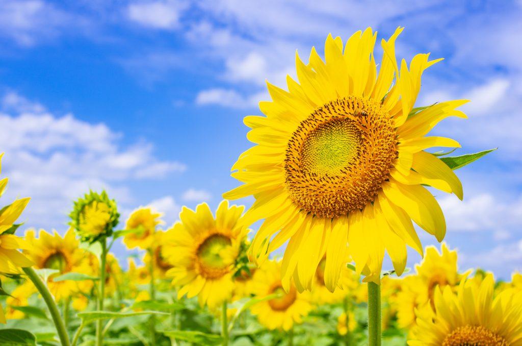 Soleil et amour dans le coeur